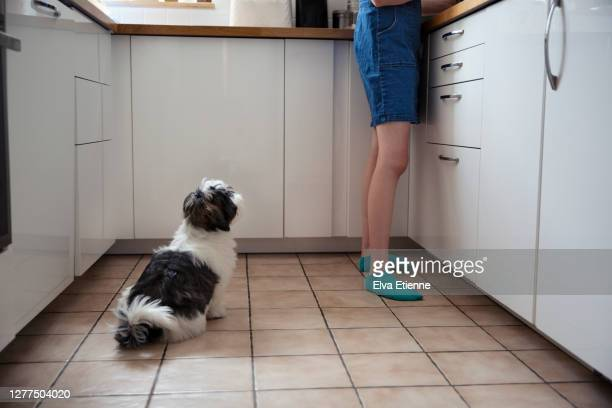 young dog watching teenager preparing food in a domestic kitchen - low section stock pictures, royalty-free photos & images