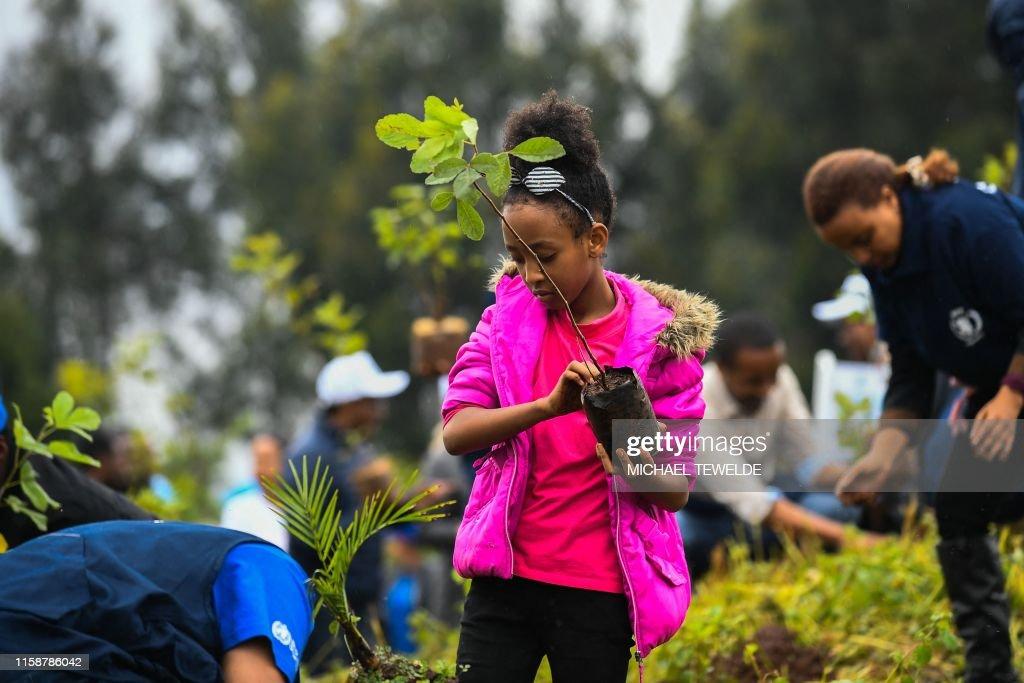 ETHIOPIA-CLIMATE-TREES : News Photo