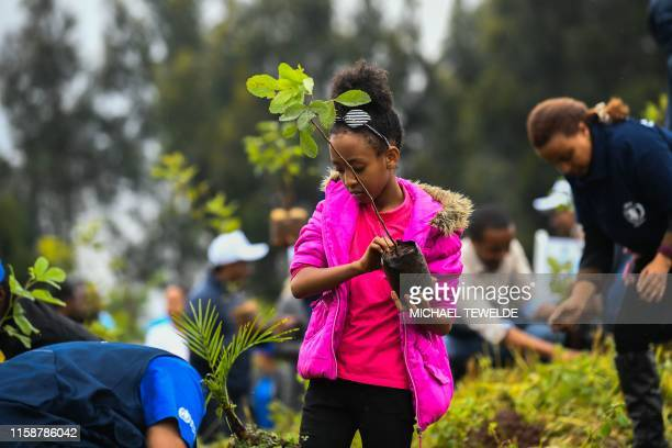 A young ethiopian girl takes part in a national treeplanting drive in the capital Addis Ababa on July 28 2019 Ethiopia plans to plant a mindboggling...