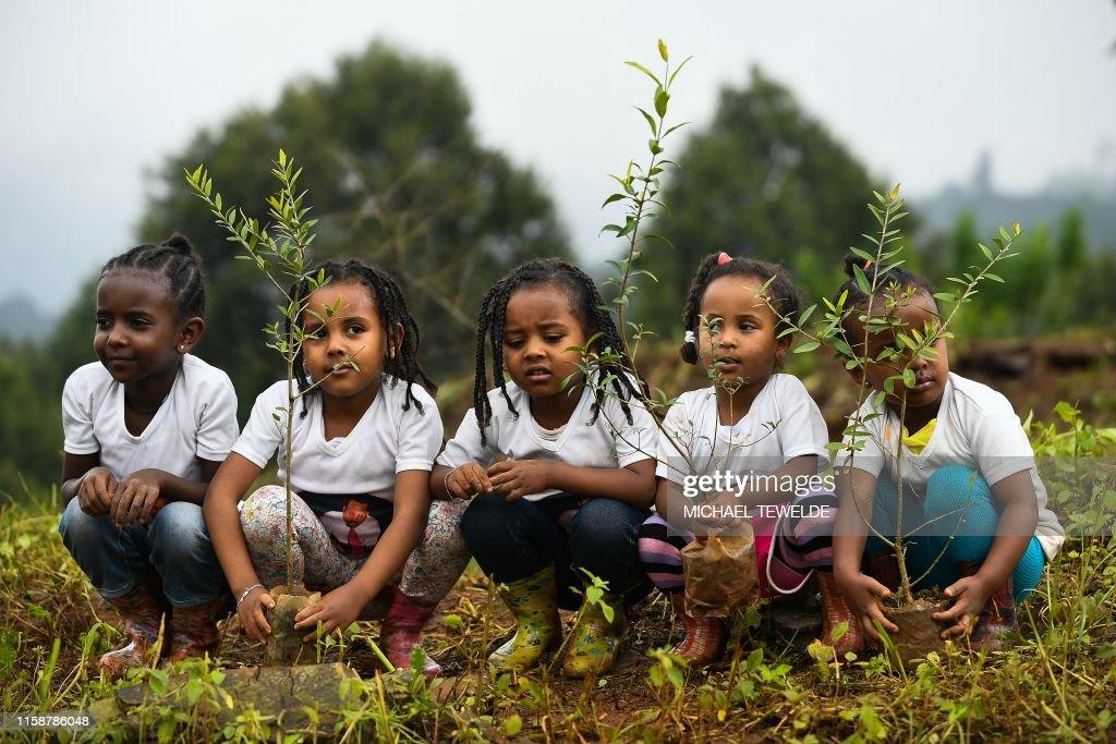 TOPSHOT-DOUNIAMAG-ETHIOPIA-CLIMATE-TREES : News Photo