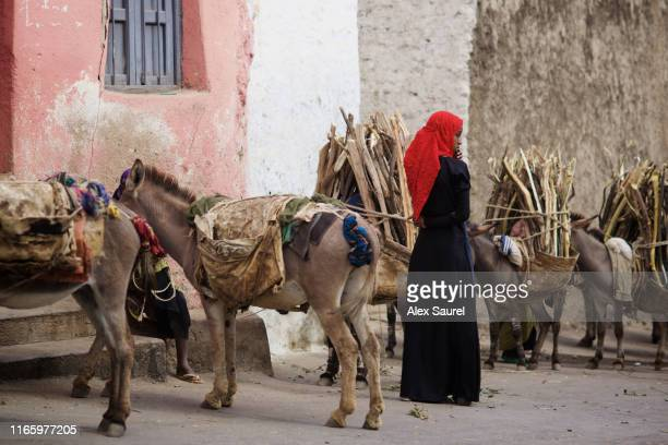 young ethiopian woman conducting donkeys, harar, ethopia - hijab feet stock pictures, royalty-free photos & images