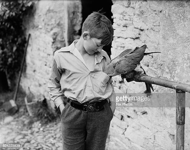 A young evacuee lets a parrot take food from his breast pocket on a farm in North Devon during World War II UK 23rd August 1941