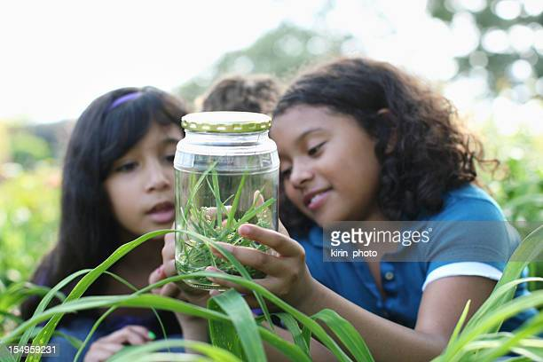 young explorers - insect stock pictures, royalty-free photos & images