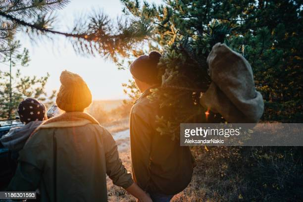 young family carrying home their christmas tree - christmas tree farm stock pictures, royalty-free photos & images