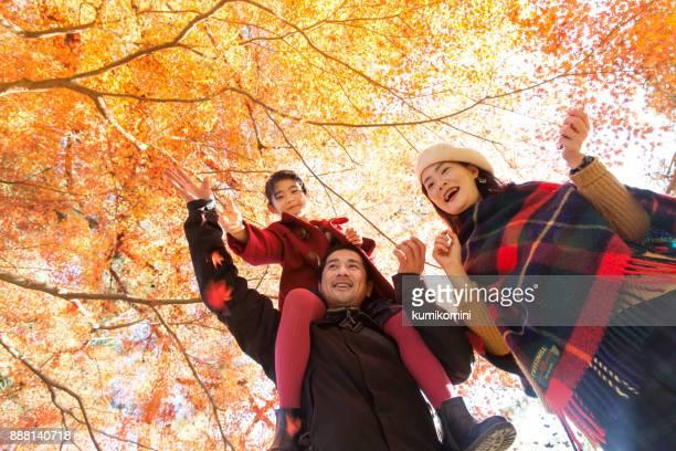 young family enjoying autumn umder japanese maple tree - japanese maple stock pictures, royalty-free photos & images