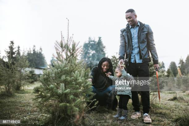 young family selecting christmas tree - christmas tree farm stock pictures, royalty-free photos & images