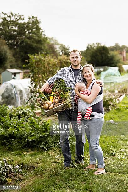 Young family standing in their allotment, smiling. Man holding a box full of freshly picked vegetables.
