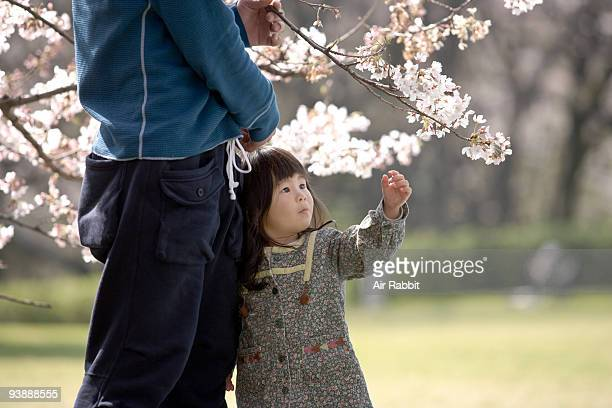 Young family under cherry blossoms tree,