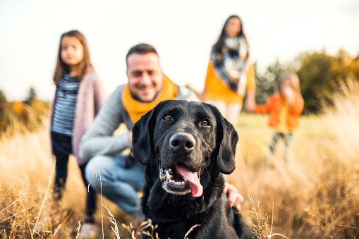 A young family with two small children and a dog on a meadow in autumn nature. 1082713202
