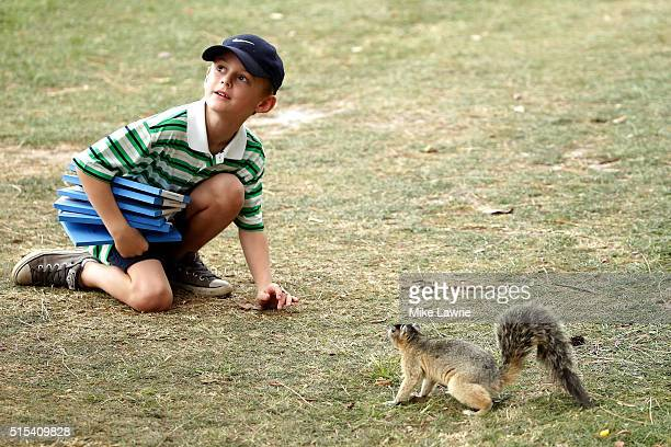 A young fan interacts with a fox squirrel during the final round of the Valspar Championship at Innisbrook Resort Copperhead Course on March 13 2016...
