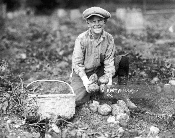 A young farm worker picks potatoes in Maine circa 1935