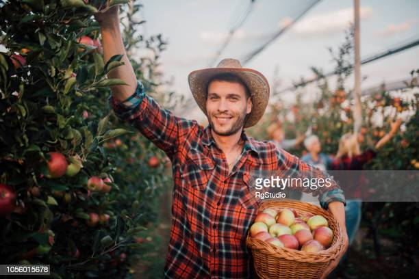 Young farmer at the apple farm