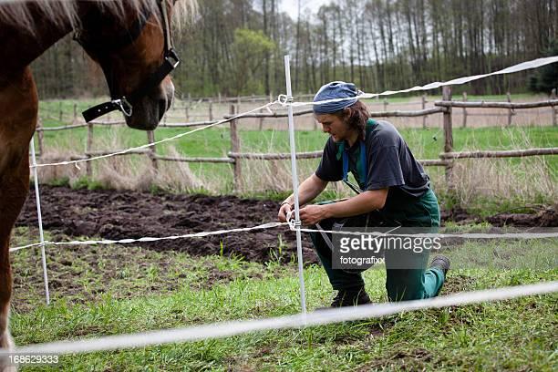 Jeune agriculteur permet une clôture électrique pour son cheval de trait