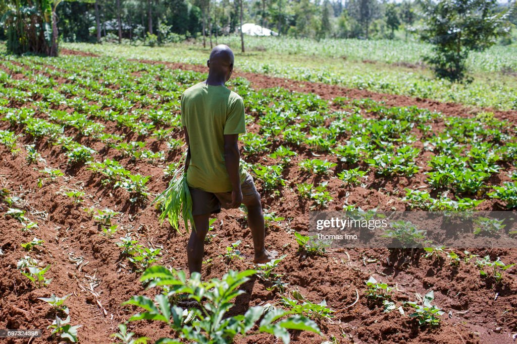 Farmer in Kenya : News Photo