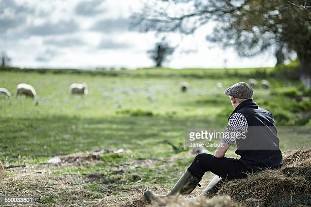 young farmer sat on hay bale watching his sheep - livestock stock pictures, royalty-free photos & images