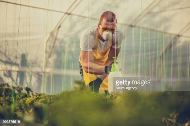 Young farmer spraying plants in greenhouse