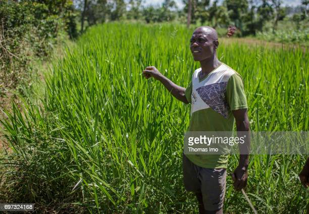 A young farmer stands on his field in Kakamega County on May 16 2017 in Kakamega County Kenya