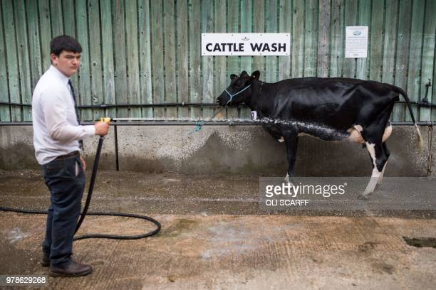 TOPSHOT A young farmer washes a cow on the first day of The Royal Cheshire County Show at Tabley near Knutsford northern England on June 19 2018 The...