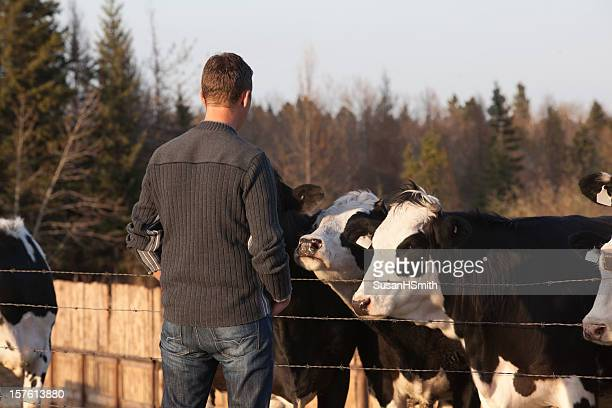 Young Farmer with cows