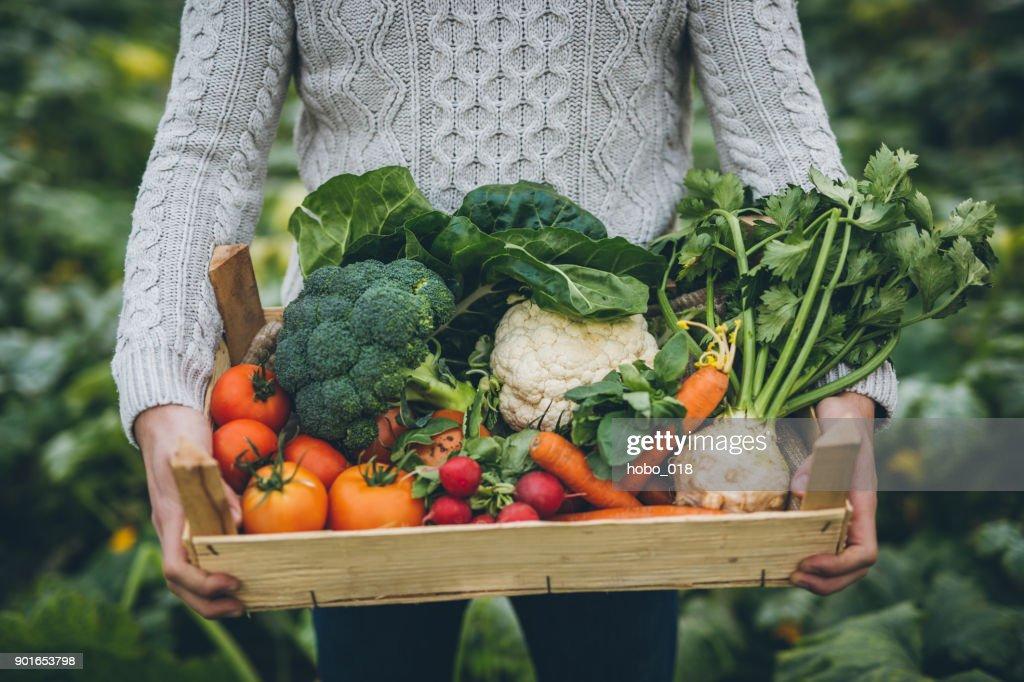 Jonge boer met krat vol met groenten : Stockfoto