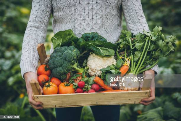 young farmer with crate full of vegetables - organic farm stock pictures, royalty-free photos & images