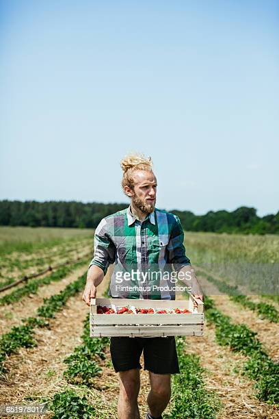 Young farmer with freshly picked strawberries