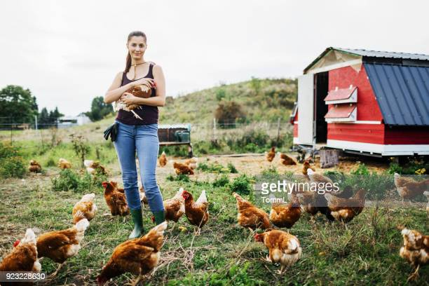 young farmer working with free range chickens - chicken coop stock pictures, royalty-free photos & images