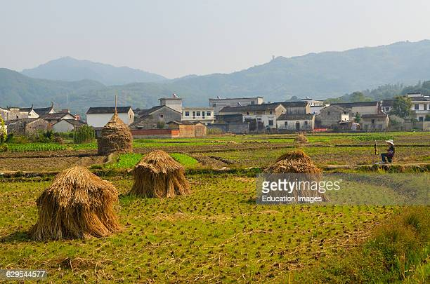 Young female art student painting haystacks and Hui style houses in farm field at Yanggancun village China