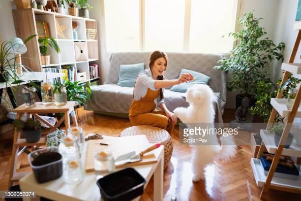 彼女の犬とその新しいトリックと若い女性の植物学者 - training grounds ストックフォトと画像