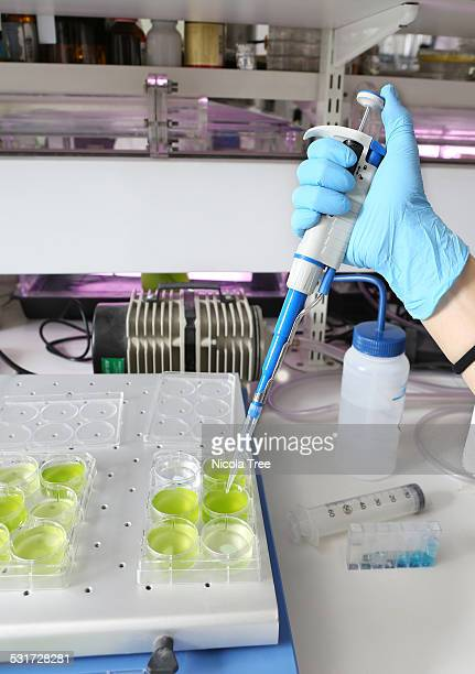 Young female engineer pipetting algae