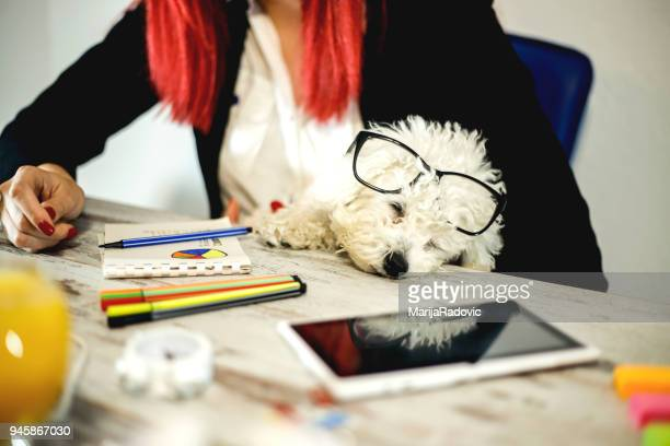 young female entrepreneur working sitting at a desk with her dog in a home office - dog pad foto e immagini stock