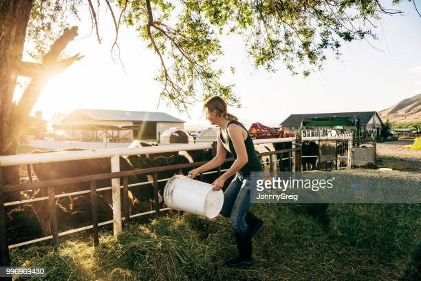 young female farm worker feeding calves on dairy farm - female animal stock pictures, royalty-free photos & images