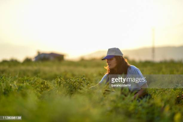 young female farmer - agronomist stock pictures, royalty-free photos & images