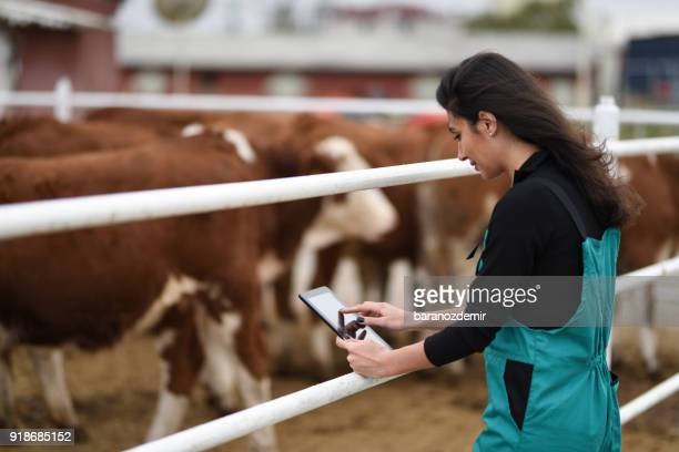 young female farmer using a digital tablet - female animal stock pictures, royalty-free photos & images