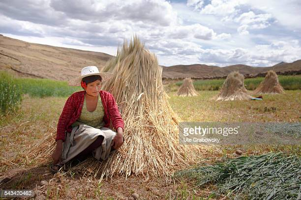Young female farmer with a sheaf of wheat in the Andes of Bolivia on April 15 2016 in Sacaca Bolivia