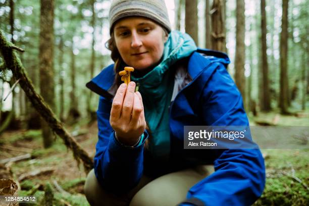 young, female forger scavenges for wild mushrooms in a lush, coastal rainforest - foerageren stockfoto's en -beelden