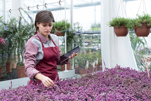 Young female gardener working in greenhouse with tablet pc - gettyimageskorea