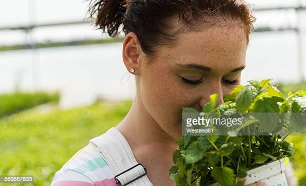 young female gardener working in plant nursery - erva cidreira imagens e fotografias de stock
