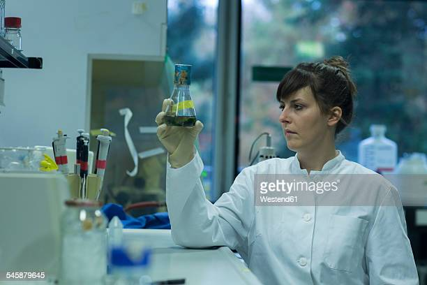 Young female natural scientist working at labroratory
