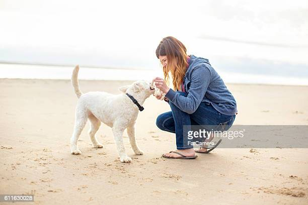 young female playing tug-of-war with her dog at the beach - dogs tug of war stock pictures, royalty-free photos & images