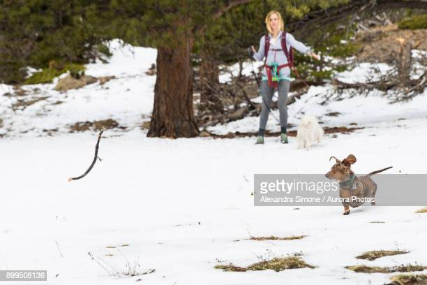 A young female plays catch with her dog in a snowy field
