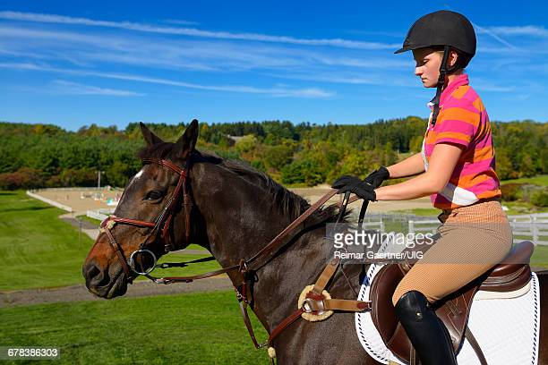 young female rider mounted on a bay thoroughbred gelding horse going to training ring - bay horse stock photos and pictures