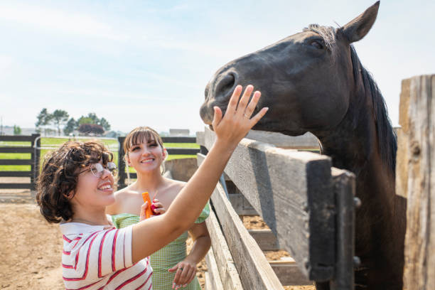 Young female same sex couple feeding a horse over corral fence