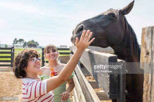 young female same sex couple feeding a horse over corral fence - fringe dress stock pictures, royalty-free photos & images