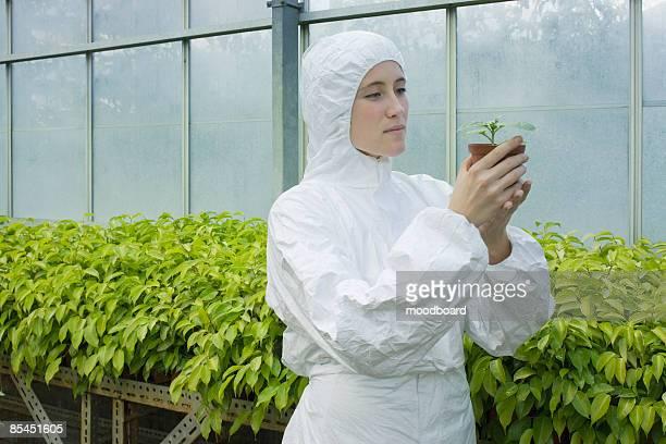 junge weibliche wissenschaftler recherchen im gewächshaus - schutzanzug stock-fotos und bilder