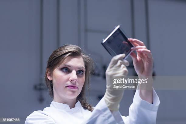 young female scientist examining microscopy slide in lab - sigrid gombert stockfoto's en -beelden