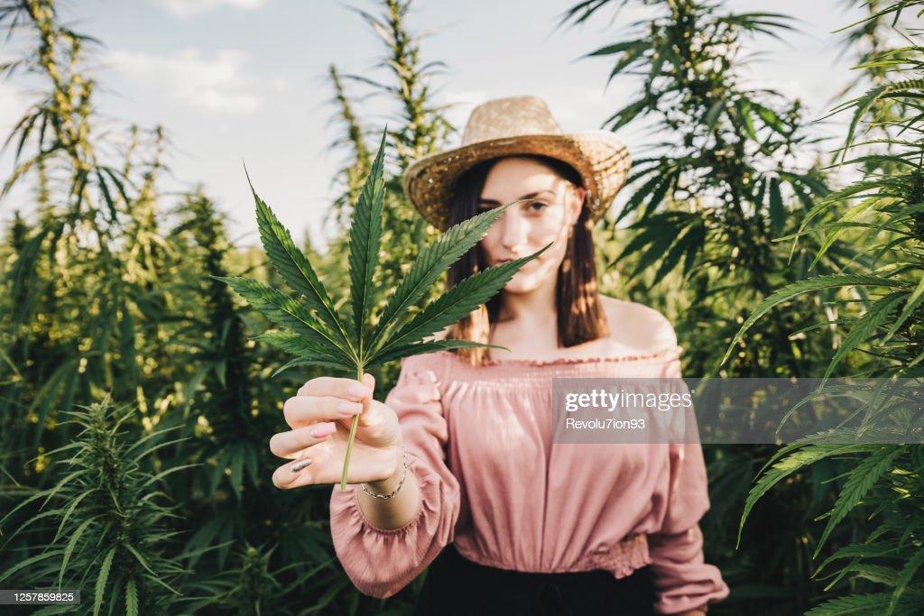 医療用マリファナ栽培の世話をする若い女性科学者 : ストックフォト