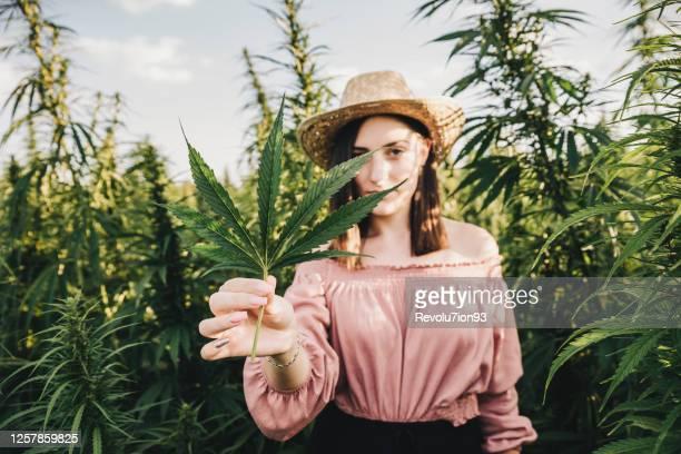 医療用マリファナ栽培の世話をする若い女性科学者 - 大麻草 ストックフォトと画像