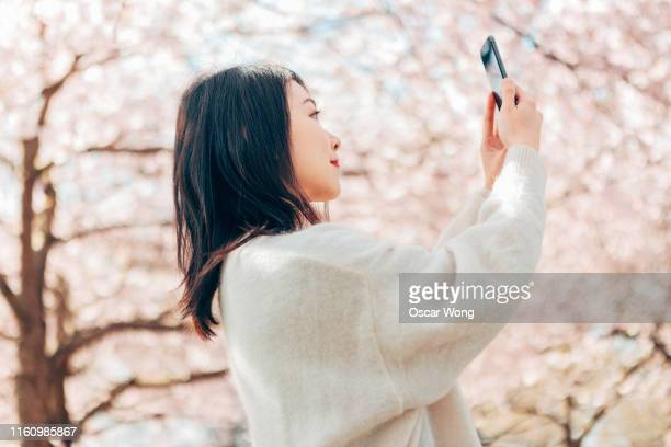 young female tourist using mobile phone to take picture of cherry blossom - 撮影テーマ ストックフォトと画像