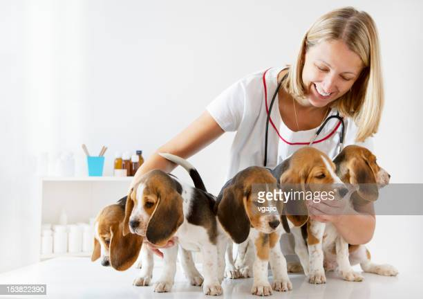 Young Female Veterinarian Check Up Cute Little Puppies, Beagles